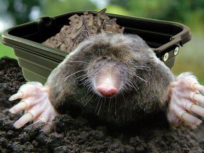 Its-mole