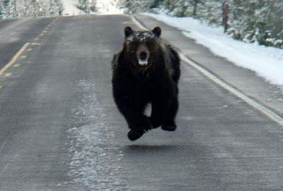 Bear4