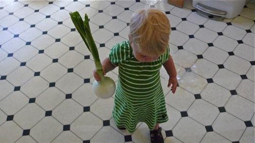 Onion onion